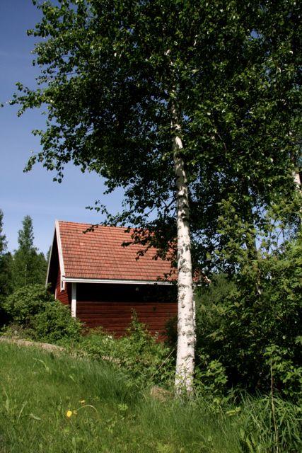 Lainajyväaitta. Kuva: MBody.info – Maria Svan